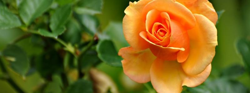 flower_05